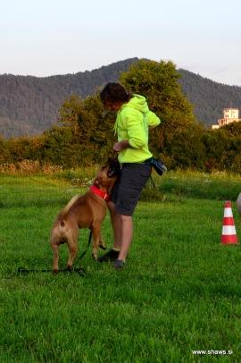 plenska igra je odličen teambuilding za vodnika in psa