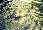 argentinska doga v vodi