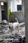 šolanje reševalnega psa
