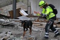 reševalni pes na ruševini