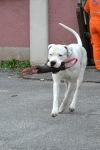 reševalni pes