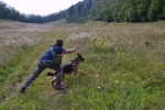 tabor reševalnih psov