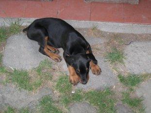 rhani_puppy
