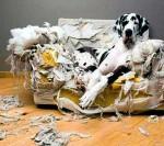 dog_trouble
