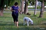 Večji kot je pes, težje je prenašati vlečenje na povodcu