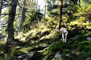 če nismo prepričani v odpoklic, imamo psa na povodcu (tudi če je dolg 10 m)
