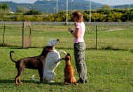 K. JESENKO - bully trening 9